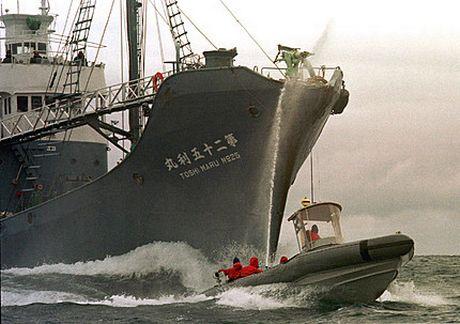 Απέπλευσαν για την Ανταρκτική τα ιαπωνικά φαλαινοθηρικά - e-Nautilia.gr | Το Ελληνικό Portal για την Ναυτιλία. Τελευταία νέα, άρθρα, Οπτικοακουστικό Υλικό
