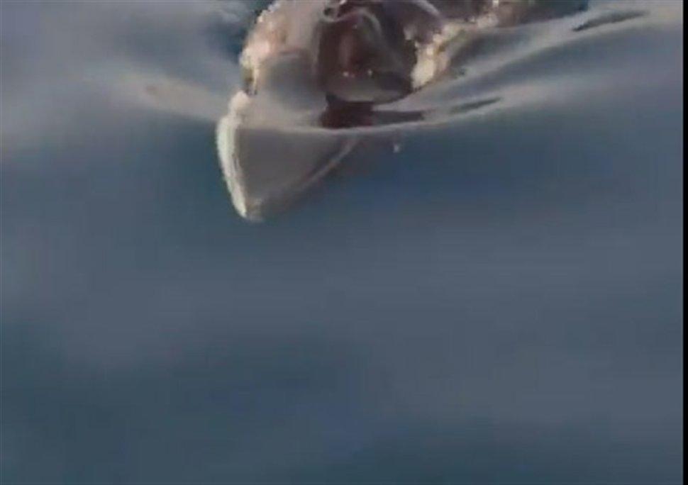 Πτεροφάλαινα ξεβράστηκε στις ακτές της Κυπαρισσίας [βίντεο] - e-Nautilia.gr | Το Ελληνικό Portal για την Ναυτιλία. Τελευταία νέα, άρθρα, Οπτικοακουστικό Υλικό