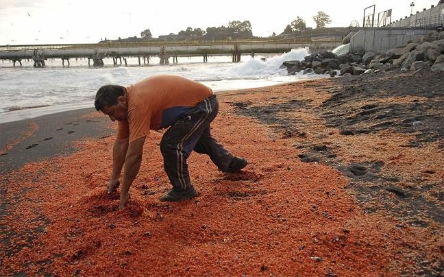 Χιλιάδες νεκρές γαρίδες ξεβράστηκαν σε ακτή της Χιλής - e-Nautilia.gr | Το Ελληνικό Portal για την Ναυτιλία. Τελευταία νέα, άρθρα, Οπτικοακουστικό Υλικό