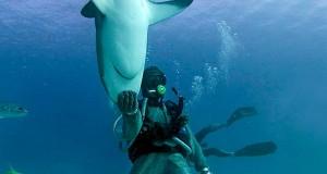 Οι καρχαρίες »εμπνέουν» τη ναυπηγική