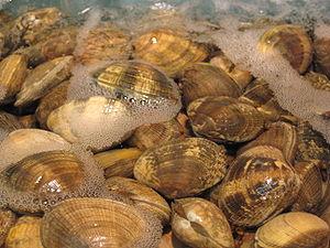 Παράνομη αλιεία οστράκων στη Βόνιτσα - e-Nautilia.gr | Το Ελληνικό Portal για την Ναυτιλία. Τελευταία νέα, άρθρα, Οπτικοακουστικό Υλικό