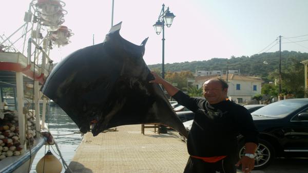Ψαράς έπιασε σαλάχι 200 κιλών στη Λευκάδα [βίντεο] - e-Nautilia.gr | Το Ελληνικό Portal για την Ναυτιλία. Τελευταία νέα, άρθρα, Οπτικοακουστικό Υλικό