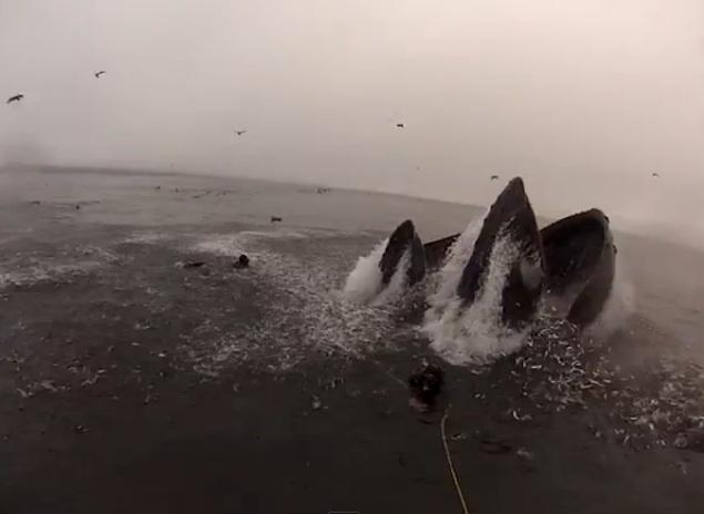 Φάλαινες βγαίνουν στην επιφάνεια δίπλα από δύτες [βίντεο+φωτο] - e-Nautilia.gr | Το Ελληνικό Portal για την Ναυτιλία. Τελευταία νέα, άρθρα, Οπτικοακουστικό Υλικό