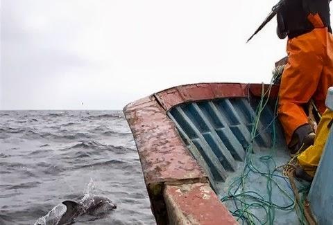 Σφάζουν δελφίνια στο Περού!Δείτε φωτογραφίες που προκαλούν ΣΟΚ! [φωτο] - e-Nautilia.gr | Το Ελληνικό Portal για την Ναυτιλία. Τελευταία νέα, άρθρα, Οπτικοακουστικό Υλικό