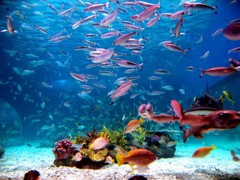 «Άρρωστο» το 98% των ωκεανών μέχρι το 2100 - e-Nautilia.gr | Το Ελληνικό Portal για την Ναυτιλία. Τελευταία νέα, άρθρα, Οπτικοακουστικό Υλικό