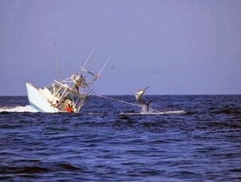 Απίστευτο: Τεράστιος ξιφίας βύθισε ψαράδικο! [φωτο] - e-Nautilia.gr | Το Ελληνικό Portal για την Ναυτιλία. Τελευταία νέα, άρθρα, Οπτικοακουστικό Υλικό