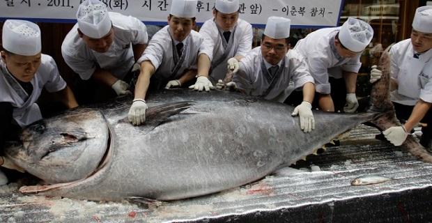 Ένα ψάρι αξίας 7,4 εκατομμυρίων γεν! - e-Nautilia.gr | Το Ελληνικό Portal για την Ναυτιλία. Τελευταία νέα, άρθρα, Οπτικοακουστικό Υλικό