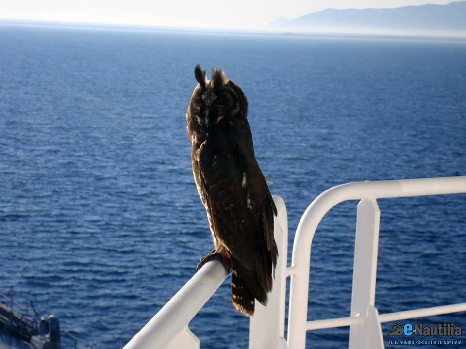 Πολυταξιδεμένος ο φίλος μας… - e-Nautilia.gr | Το Ελληνικό Portal για την Ναυτιλία. Τελευταία νέα, άρθρα, Οπτικοακουστικό Υλικό