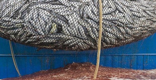ΕΛΚΕΘΕ: Ανησυχητική η μείωση των ψαριών στη Μεσόγειο - e-Nautilia.gr | Το Ελληνικό Portal για την Ναυτιλία. Τελευταία νέα, άρθρα, Οπτικοακουστικό Υλικό