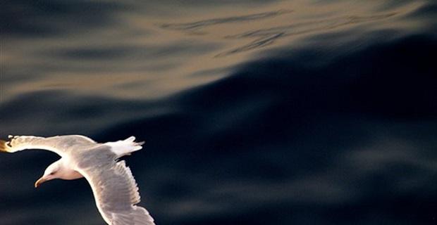 Ευρωπαϊκή Ημέρα Θάλασσας 2015 - e-Nautilia.gr | Το Ελληνικό Portal για την Ναυτιλία. Τελευταία νέα, άρθρα, Οπτικοακουστικό Υλικό