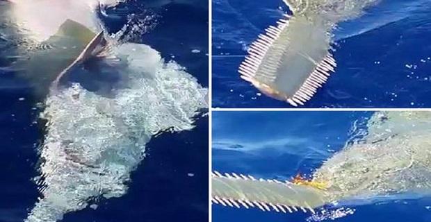 Αλλόκοτο θαλάσσιο πλάσμα αναδύθηκε μπροστά τους [video] - e-Nautilia.gr | Το Ελληνικό Portal για την Ναυτιλία. Τελευταία νέα, άρθρα, Οπτικοακουστικό Υλικό