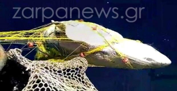 Χανιά: Ψάρεψε καρχαρία… 5 μέτρων [pics] - e-Nautilia.gr | Το Ελληνικό Portal για την Ναυτιλία. Τελευταία νέα, άρθρα, Οπτικοακουστικό Υλικό