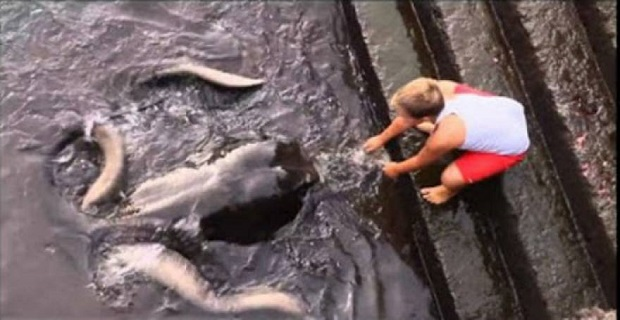 Πιτσιρικάς παίζει με γιγαντιαίο σαλάχι στην άκρη μίας μαρίνας [video] - e-Nautilia.gr | Το Ελληνικό Portal για την Ναυτιλία. Τελευταία νέα, άρθρα, Οπτικοακουστικό Υλικό