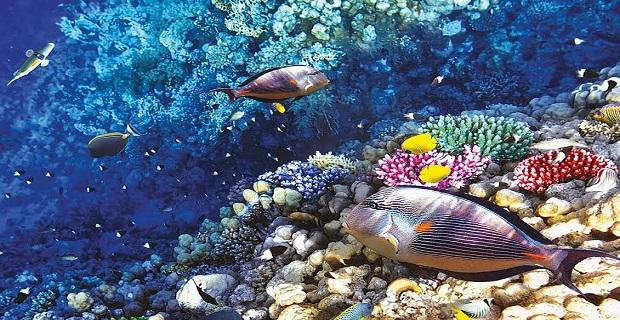 Η Περιβαλλοντική Εκστρατεία της HELMEPA στην Αίγινα - e-Nautilia.gr | Το Ελληνικό Portal για την Ναυτιλία. Τελευταία νέα, άρθρα, Οπτικοακουστικό Υλικό
