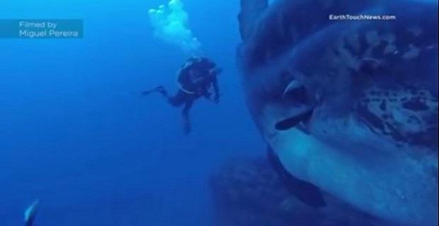 Αυτό είναι το μεγαλύτερο ψάρι στον κόσμο![video] - e-Nautilia.gr | Το Ελληνικό Portal για την Ναυτιλία. Τελευταία νέα, άρθρα, Οπτικοακουστικό Υλικό