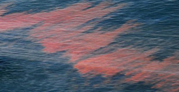 Deepwater Horizon Oil Spill Response in Louisianna