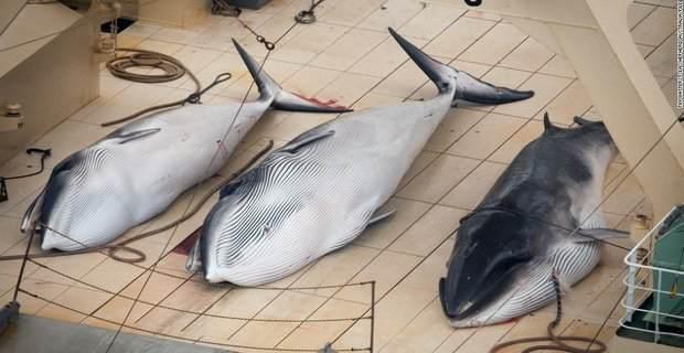 Η Sea Shepherd οργανώνει την 11η Εκστρατεία Προστασίας Φάλαινας στην Ανταρκτική - e-Nautilia.gr | Το Ελληνικό Portal για την Ναυτιλία. Τελευταία νέα, άρθρα, Οπτικοακουστικό Υλικό