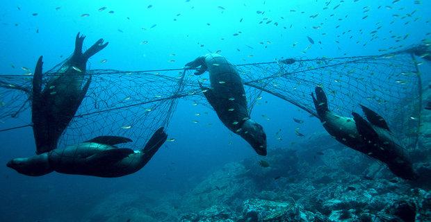 Ο πρώτος οδηγός για την διαχείριση αλιευτικού εξοπλισμού - e-Nautilia.gr   Το Ελληνικό Portal για την Ναυτιλία. Τελευταία νέα, άρθρα, Οπτικοακουστικό Υλικό