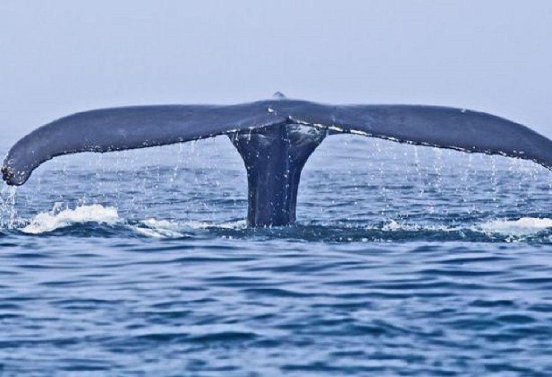 Μέτρα για την προστασία των θαλασσίων κητών από το υπουργείο Ναυτιλίας - e-Nautilia.gr | Το Ελληνικό Portal για την Ναυτιλία. Τελευταία νέα, άρθρα, Οπτικοακουστικό Υλικό