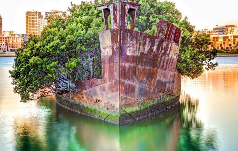 Το εγκαταλελειμμένο πλοίο που έγινε πλωτό δάσος (Photos) - e-Nautilia.gr | Το Ελληνικό Portal για την Ναυτιλία. Τελευταία νέα, άρθρα, Οπτικοακουστικό Υλικό