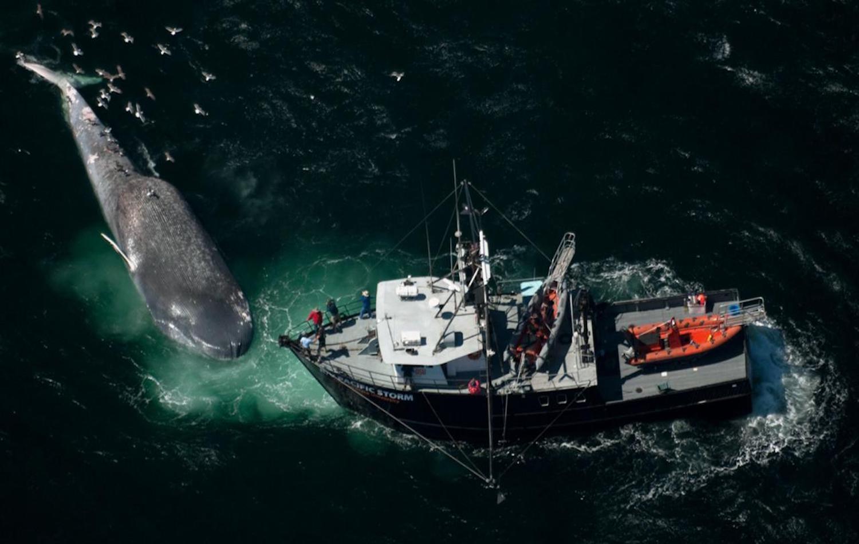 Παταγονία: Κινδυνεύουν οι μπλε φάλαινες από τις συγκρούσεις με πλοία - e-Nautilia.gr | Το Ελληνικό Portal για την Ναυτιλία. Τελευταία νέα, άρθρα, Οπτικοακουστικό Υλικό