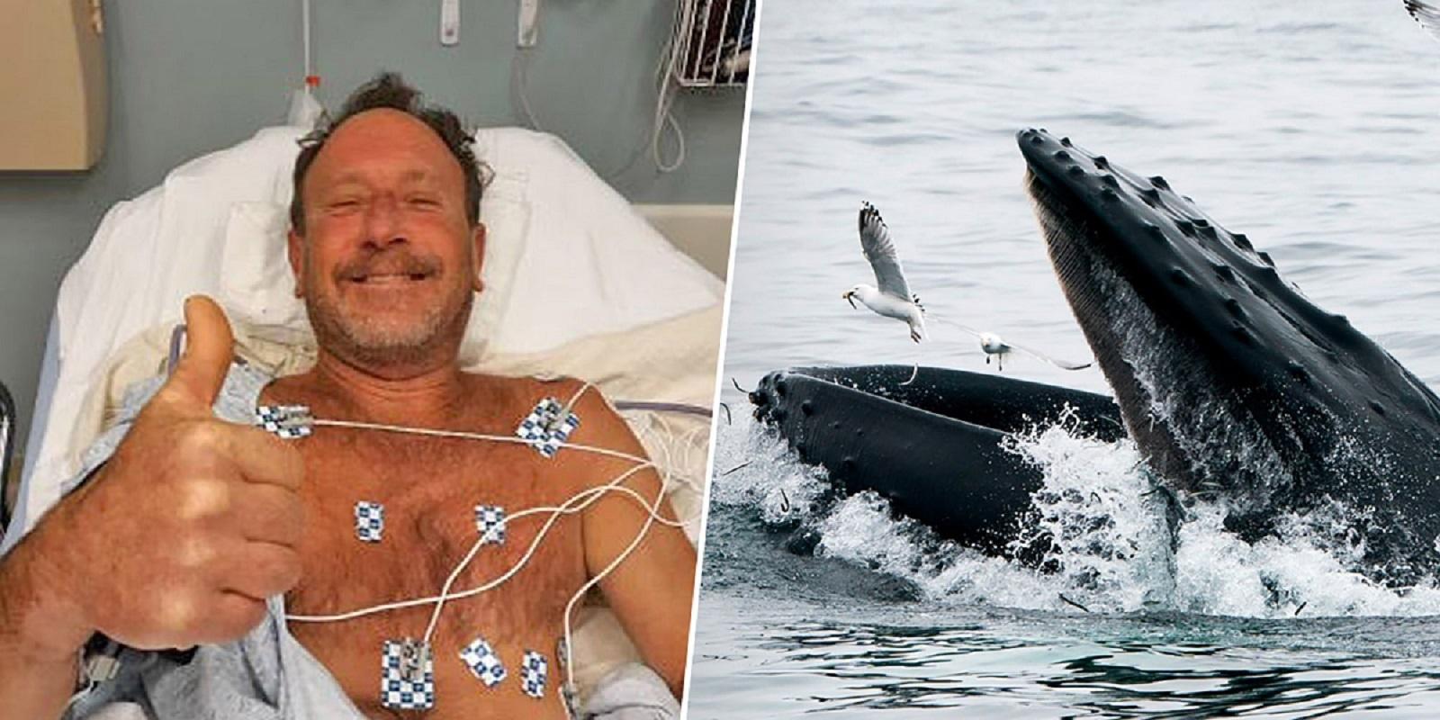 Φάλαινα κατάπιε δύτη και στην συνέχεια τον έφτυσε! - e-Nautilia.gr   Το Ελληνικό Portal για την Ναυτιλία. Τελευταία νέα, άρθρα, Οπτικοακουστικό Υλικό