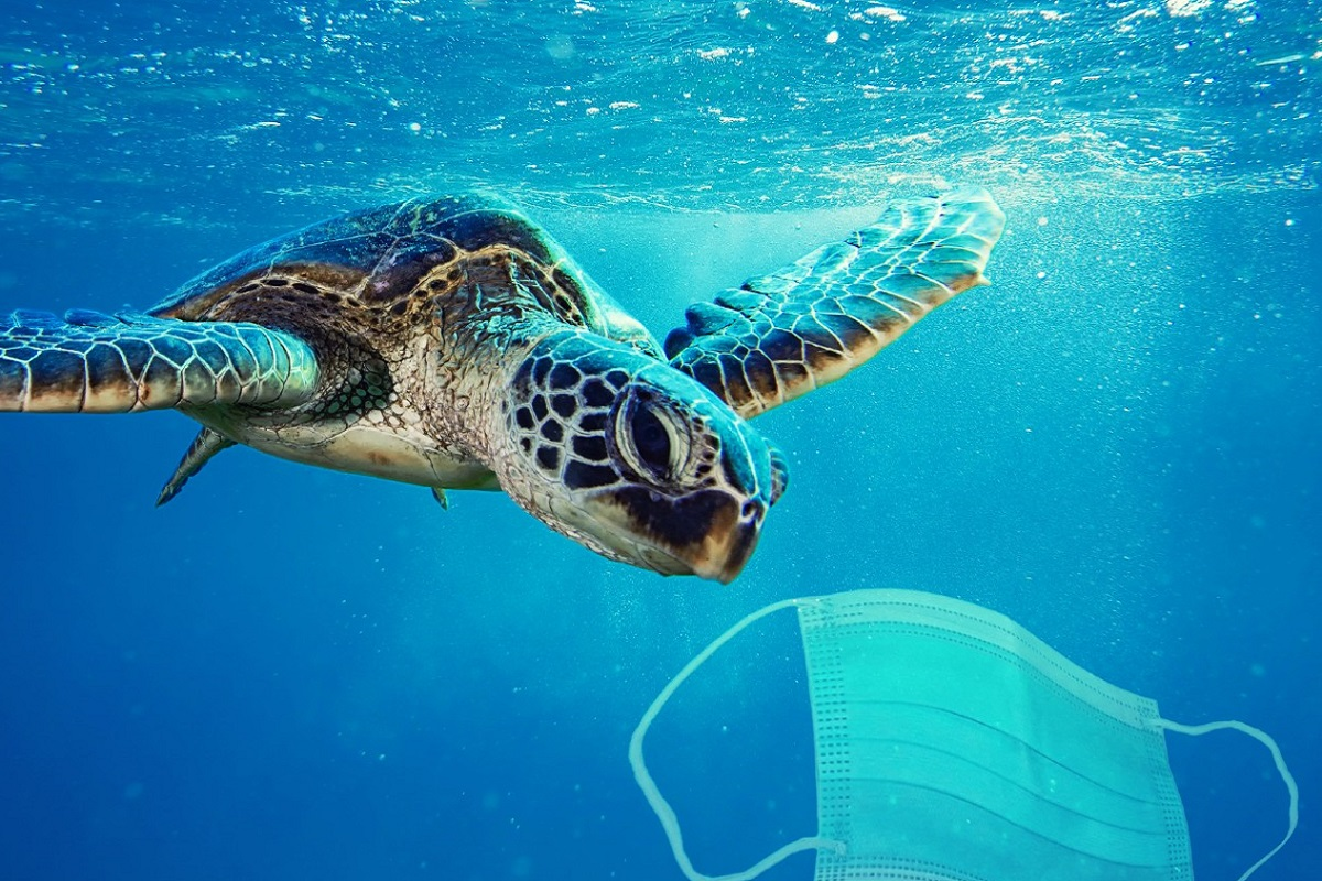 Μια νέα απειλή ρύπανσης των θαλασσών: Oι μάσκες του προσώπου - e-Nautilia.gr   Το Ελληνικό Portal για την Ναυτιλία. Τελευταία νέα, άρθρα, Οπτικοακουστικό Υλικό
