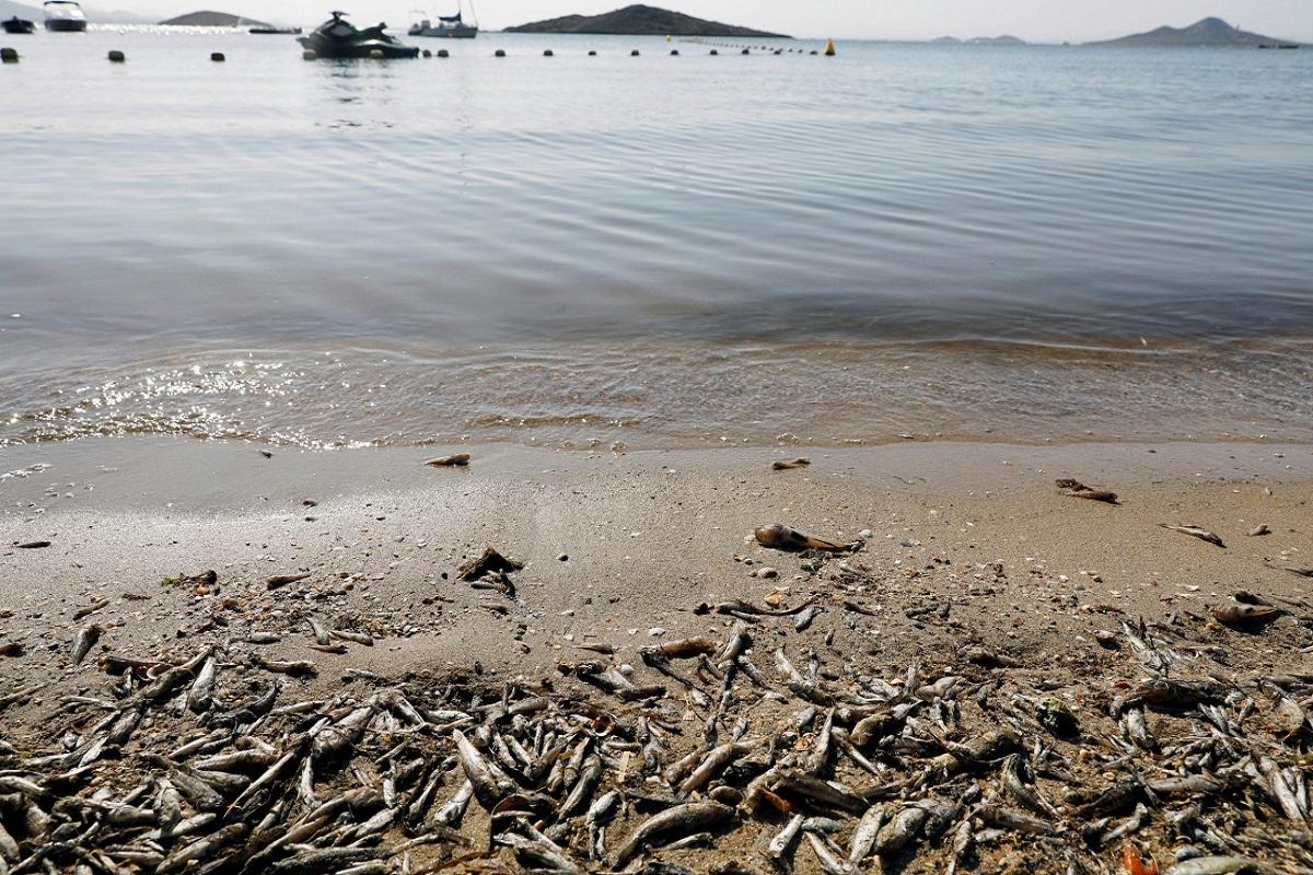 Ισπανία: 4,5 τόνοι νεκρών ψαριών ξεβράστηκαν στις ακτές λιμνοθάλασσας - e-Nautilia.gr | Το Ελληνικό Portal για την Ναυτιλία. Τελευταία νέα, άρθρα, Οπτικοακουστικό Υλικό